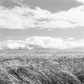 weizenfelder bei binnenbach