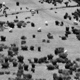 /Irland: EUROPA, IRLAND, GLENCOLMCILLE, 13.04.2009: Typisches Landschaftsbild im Donegal County: gruene Schafswiese.- Valeska Achenbach und Isabela Pacini/VISUM - Stichworte: Schaf, Schafe, Fell, Schafsfell, Feld, Felder, Wiese, Wiesen, Gebuesch, Vegetation, Landschaft, Landschaften, Natur, Tier, Tiere, Tierhaltung, Umwelt, tierfreudlich, umweltfreundlich, futtern, Weide, Weiden, Grass, Rasen, Schafsherde, Landwirtschaft, Bauer, Bauernhof, Rudel, Gruen, Maehen